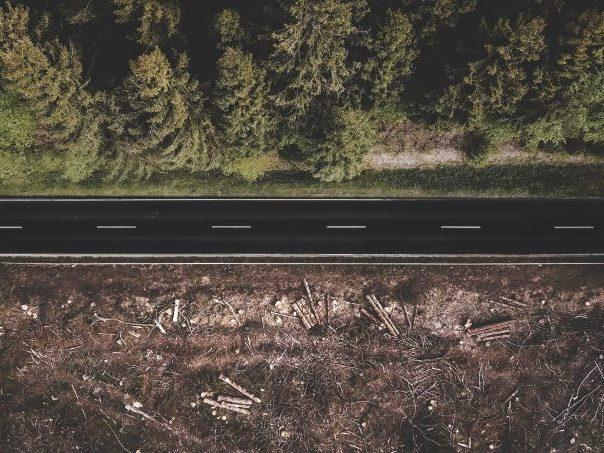 על הקשר בין הרס הטבע והתפרצות מגפות זואונוטיות