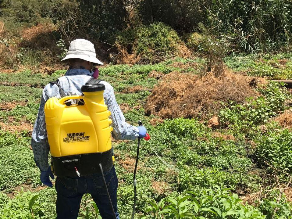 האם הדברת זחלי יתושים במקווי מים מסכֶּנת דבורים?