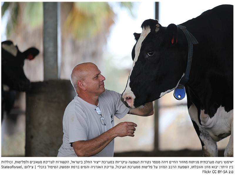 אימוץ גישה מערכתית לניתוח ממשקים סביבתיים של ייצור חלב בקר בישראל