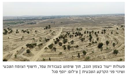 """מ""""שיפור הנוף"""" לשמירת המערכות האקולוגיות הטבעיות – הצורך בהפסקת פעולות ייעור בשטחים טבעיים בישראל"""