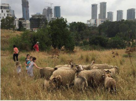 ניצול הזדמנויות לשיקום וליצירה של מוקדי טבע בעיר תל-אביב-יפו