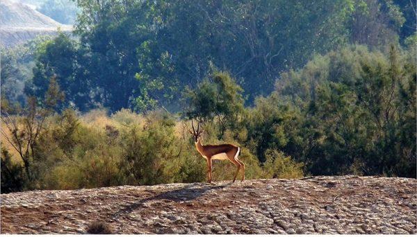 יש להכריז על שמורת טבע בנהר הירדן הדרומי