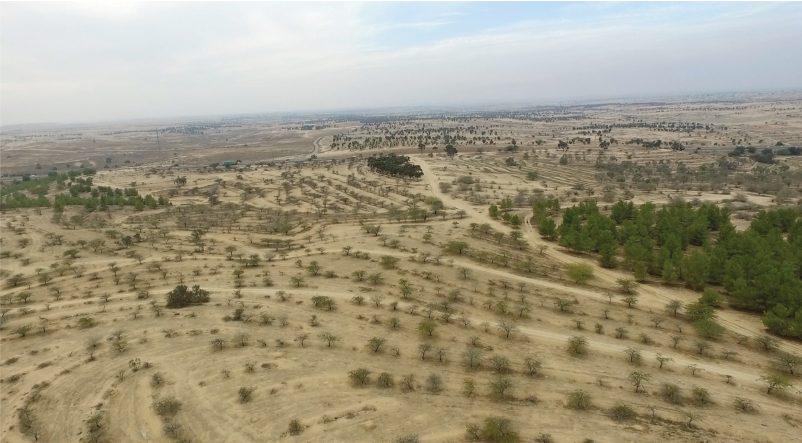 נטיעת עצים למיתון שינוי האקלים? לא הפתרון עבור ישראל