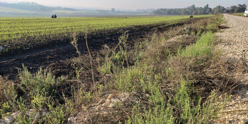 חשש לירידה ביעילות הדברת עשבים כימית עקב שינוי תנאי הסביבה