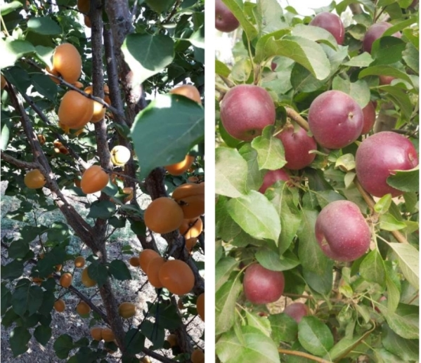 חשיבות החקלאות הישראלית במשבר הקורונה ובמשברים העתידיים
