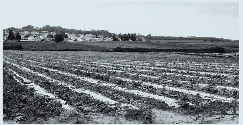 המועצות האזוריות ידאגו למסדרונות אקולוגיים המספקים שכבת הגנה לשטחים חקלאיים