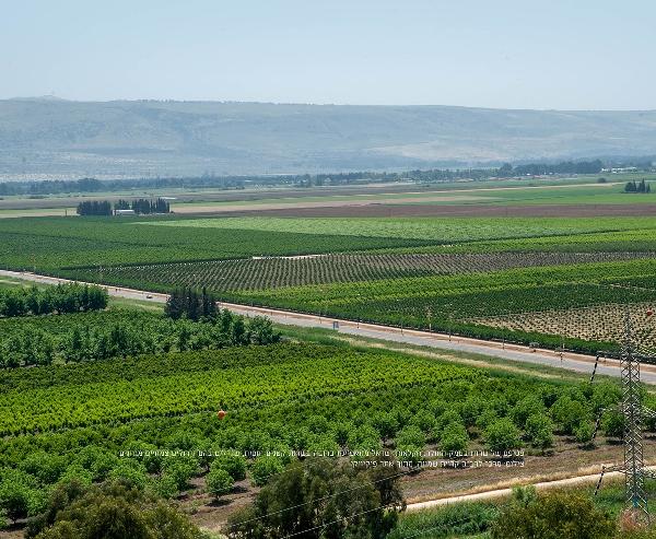 תזונה מקיימת וביטחון תזונתי בחקלאות בישראל – נתונים כמותיים מגידולי הצומח