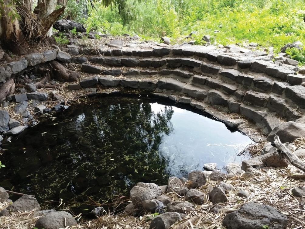 זרימת מים טבעיים בנחלים – מה נעשה בעשור האחרון ולאן פנינו?