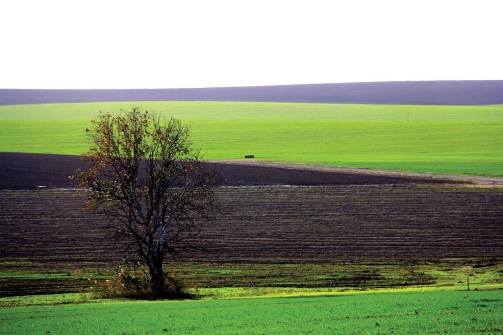 איבוד קרקע בצפון הנגב – השפעה של המלחת גדות נחלים על תהליכי בליה וסחיפה