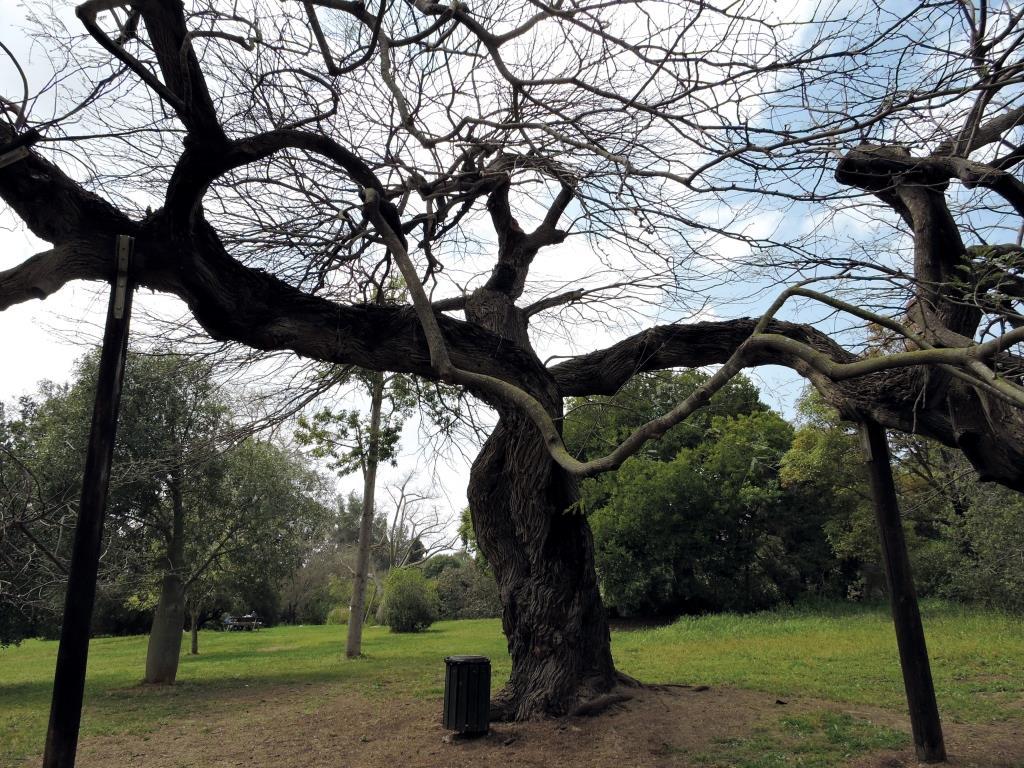 חזון היער העירוני בישראל – עתיד העצים בעיר