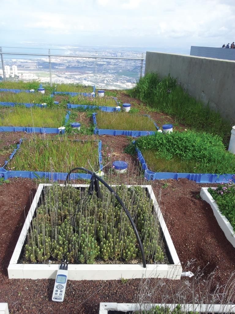 השפעת הרכב הצמחייה על קצב קיבוע פחמן בגגות ירוקים