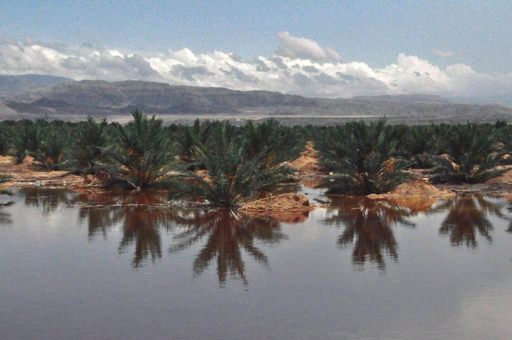כיכר סדום – האתגר בקיום חקלאות בשטחי מלחה