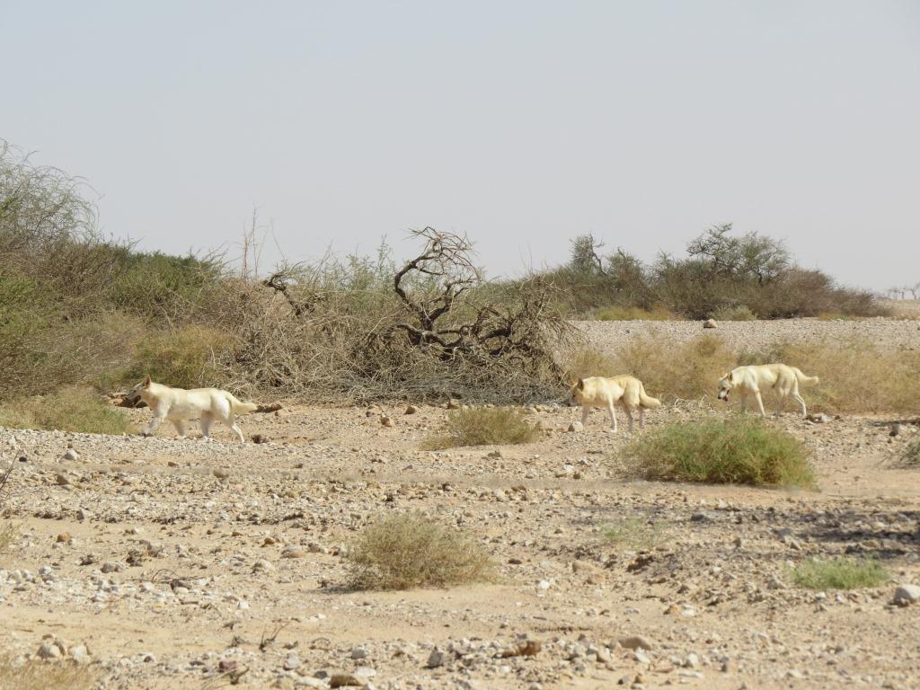 מדיניות ציד למטרת ויסות אוכלוסיות בעלי חיים