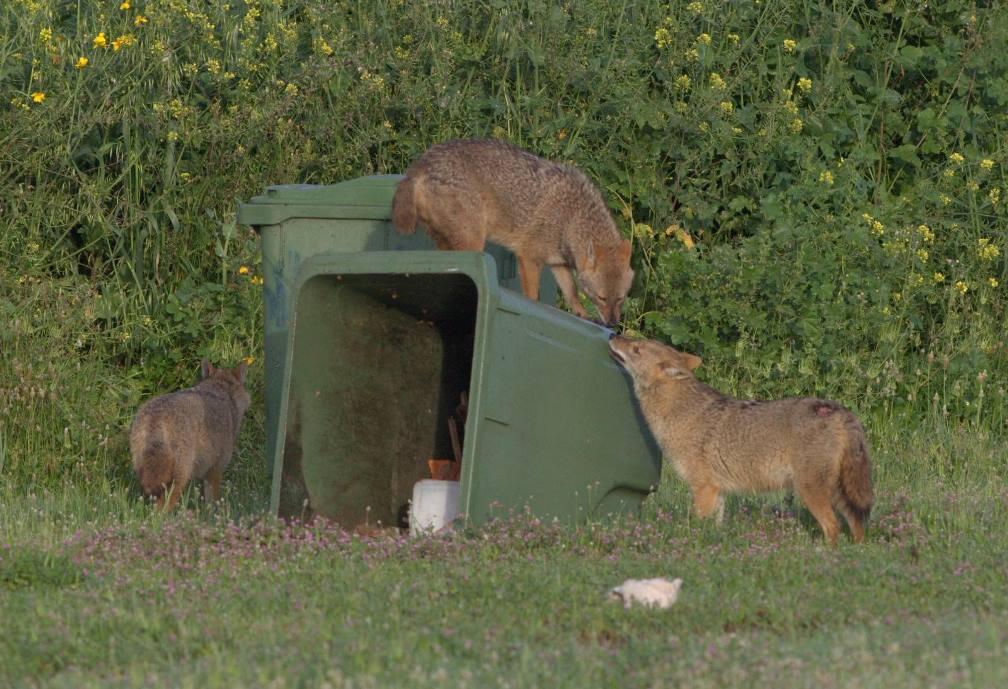 לא קיים מתח בין שמירה אמִתית על הסביבה לבין זכויות בעלי החיים