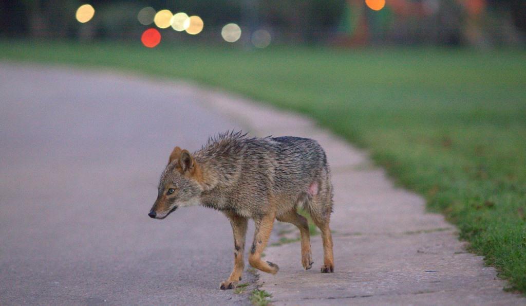 המתח בין שמירת טבע לזכויות בעלי החיים