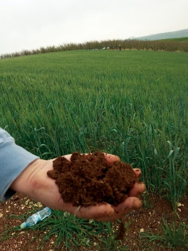 בריאות קרקע בישראל – פיתוח וגיבוש של מדד רב-גורמי לאפיון בריאות קרקע חקלאית ובחינתו במספר ממשקים משמרים