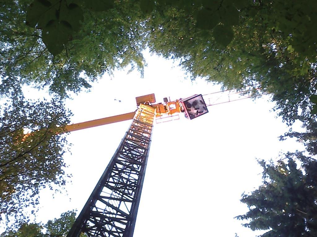 מעבר פחמן בין שורשים של עצי יער גבוהים דרך רשת קורי פטריות