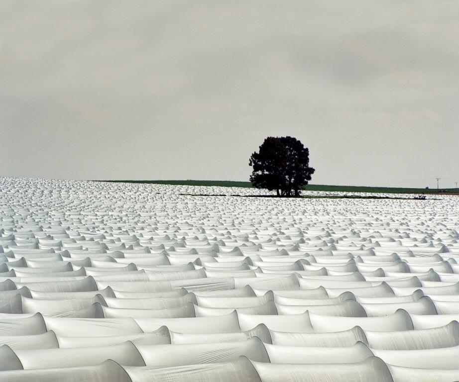 תוצרי לוואי חקלאיים כמשאב לאנרגיה – היתכנות ומדיניות