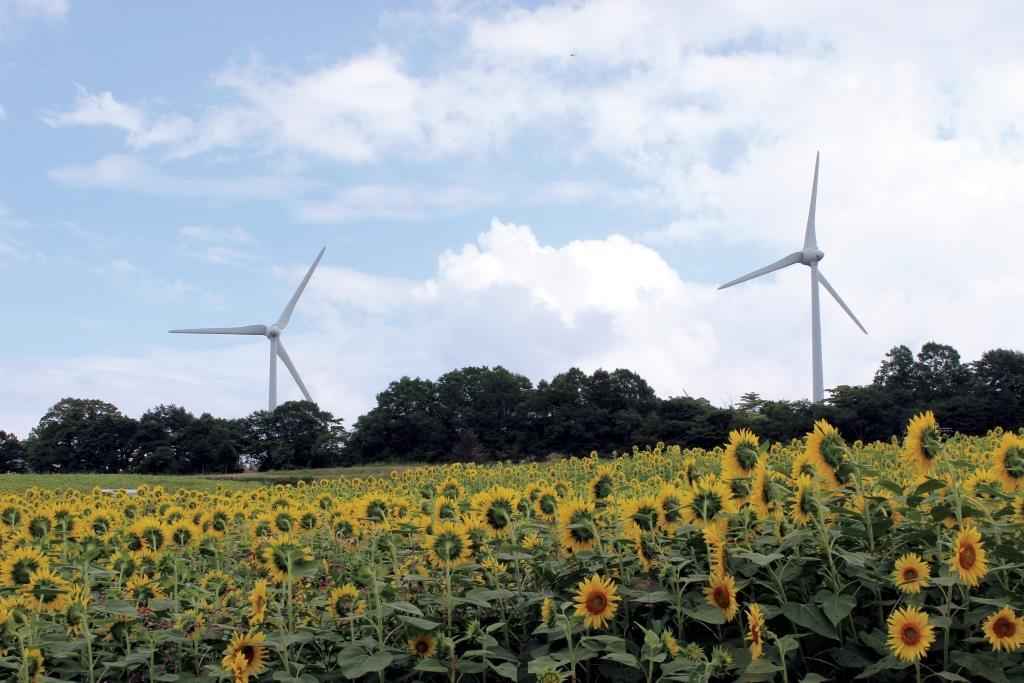 הערכה כלכלית-סביבתית של הפקת אנרגיה באמצעות טורבינות רוח בישראל