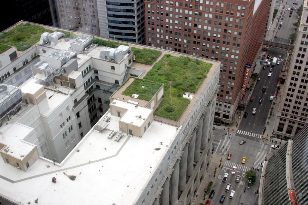 הגג של השכן ירוק יותר