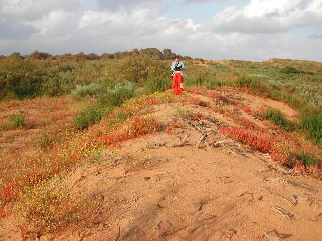 ערכן האקולוגי-כלכלי של דיונות החול במישור החוף