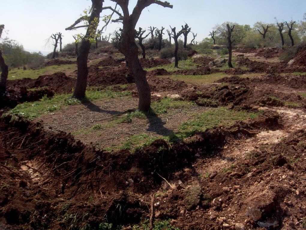 מערך הצומח באזור אלונים–מנשה בהתאמה למבנה המרחבי של מערכת הסלע-קרקע ותכונות בתי הגידול