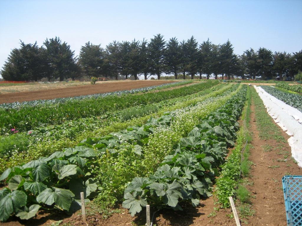 חקלאות אורגנית כשמורת טבע