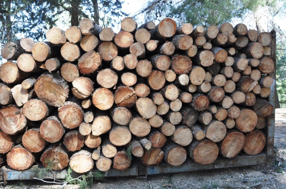 ממשק יער מונחה מאזן מים – מודל פשוט והשלכות על צפיפות העצים ביער יתיר